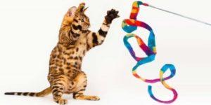 Les jeux pour chats sont importants pour l'équilibre de nos félins