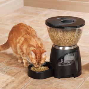Avec un distributeur de croquettes pour chat, vous pourrez nourrir matou régulièrement en votre absence !